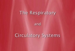 The Respiratory & Circulatory Systems