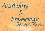 Anatomy & Physiology of Aquatic Species