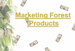 Marketing Forest Products