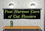 Post Harvest Care of Cut Flowers