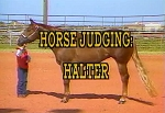 How To Judge Halter Horses