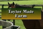 Field Trip: Thoroughbred Farm