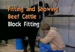 Fitting & Showing Beef Cattle -Block Fitting