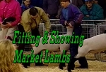 Fitting & Showing Market Lambs