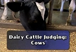 Dairy Cattle Judging: Cows