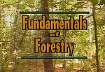 Fundamentals of Forestry