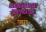 Landscape Plant ID: Trees