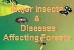 Major Insects & Diseases Affecting Forests