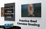 Practice Beef Carcass Grading
