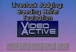 Livestock Judging: Breed Heifer Evaluation