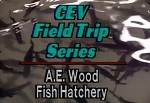 Field Trip: Fish Hatchery