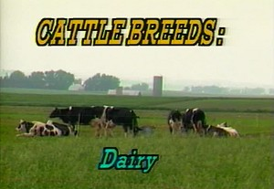 Cattle Breed ID Dairy
