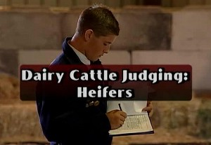 Dairy Cattle Judging: Heifers
