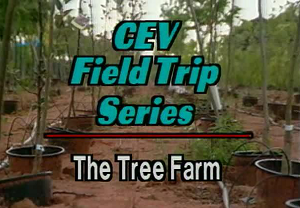 Field Trip: Tree Farm