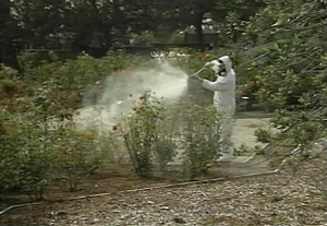Pesticide Safety in Landscape - Spanish