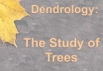 Dendrology:  The Study of Trees