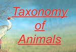 Taxonomy of Animals