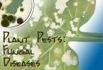 Plant Pests: Fungal Diseases