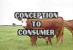 Conception to Consumer