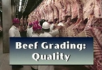 Beef Grading: Quality
