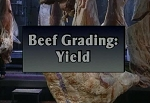 Beef Grading: Yield