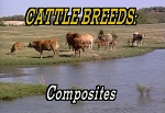 Cattle Breed ID Composites