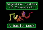 Digestive Systems of Livestock: A Basic Look