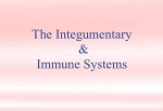 Integumentary & Immune Systems