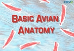 Basic Avian Anatomy
