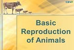 Basic Reproduction of Animals