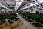 Introduction to Greenhouse Management