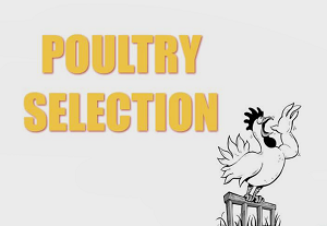 Poultry Selection