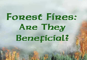 Forest Fires: Are they Beneficial?