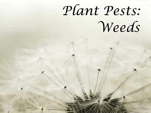 Plant Pests: Weeds