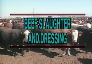 Beef Slaughter & Dressing