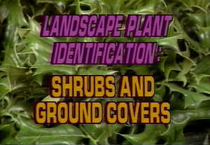 Landscape Plant ID: Ground Cover & Shrubs