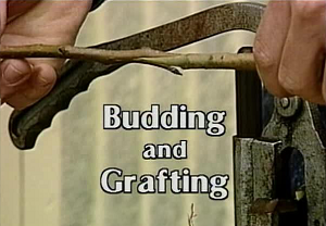 Budding & Grafting