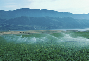 Certified Irrigation Designers III